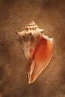 Malleus, Incus, Stapes by Sarah Totton