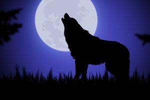 Self-Portrait as Wolf
